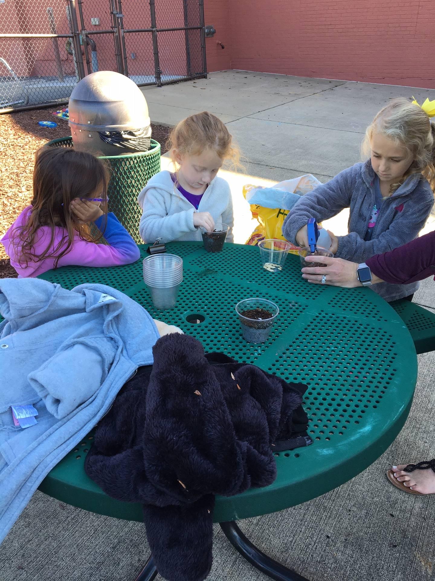 Kindergarten Plants Pumpkin Seeds